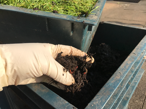 Worm Farming Vermiculture Compost Tea
