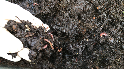 vermicomposting soil