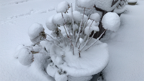 Container Garden: My Garden covered with snow