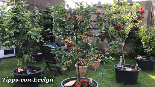 Container Gardening: Growing Fruit Tree, Herbs, and Vegetables all year round