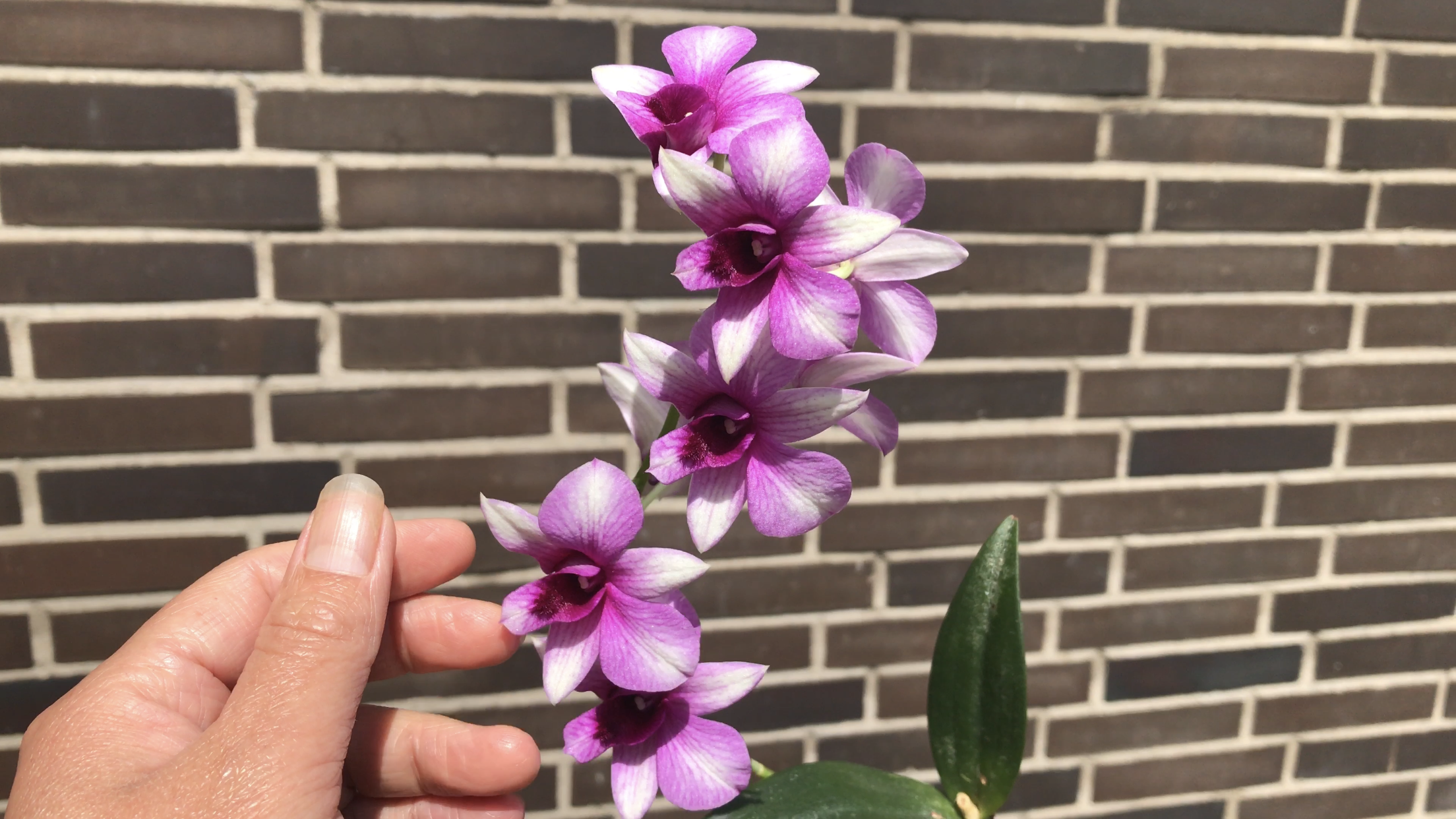 How to grow Orchids, how to care for orchids, Don't when growing orchids, How to reboom orchids, How to grow Orchids In water, How to grow Orchids from Cuttings, Indoor Orchid care, Growing Orchids, Orchid care Instructions, Orchid Care For beginners, Orchid Air roots, where to cut orchid stem after bloom, Orchid care 10 easy tips,how to keep your orchids, How to make orchids bloom, easy care orchids, how to plant orchids, How to Grow Orchids Indoors, Home orchid growing, Tips for growing orchids, Look after orchid